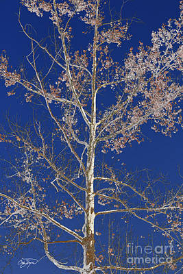 Blue Sky With A Twist Of Birch Poster