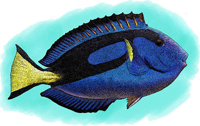 Blue Tang, Illustration Poster by Roger Hall