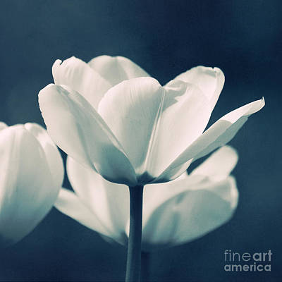 Blue Velvet Poster by Angela Doelling AD DESIGN Photo and PhotoArt