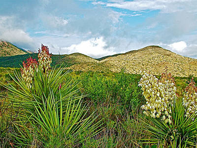 Blue Yucca And Chisos Mountains In Big Bend National Park-texas Poster by Ruth Hager