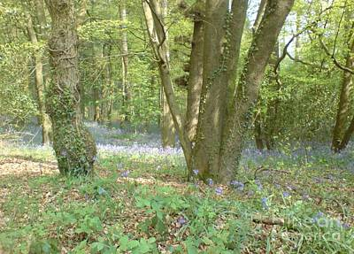 Poster featuring the photograph Bluebell Wood by John Williams