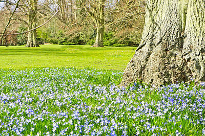 Bluebells Poster by Tom Gowanlock