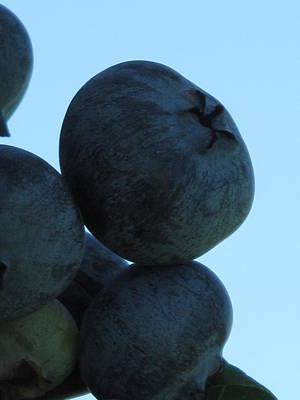 Blueberry Boulder Poster