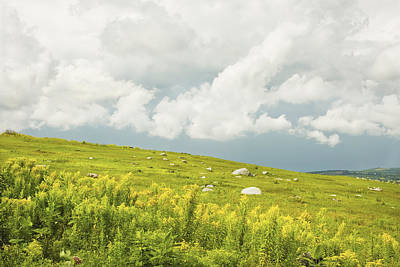 Blueberry Field And Goldenrod With Dramatic Sky In Maine Poster