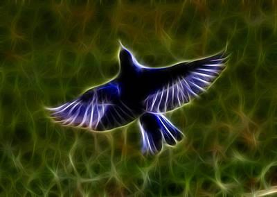 Bluebird In Flight Poster
