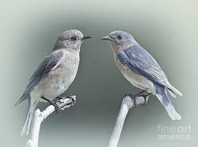 Bluebirds In Love Poster by Susan Candelario