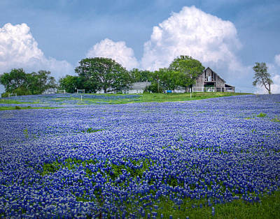 Bluebonnet Farm Poster by David and Carol Kelly