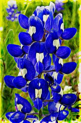 Poster featuring the photograph Bluebonnet by Kathy Churchman