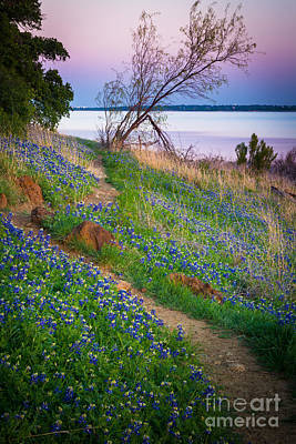 Bluebonnet Path Poster by Inge Johnsson