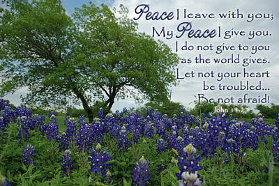 Bluebonnet Peace Poster by Robyn Stacey