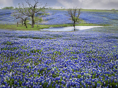 Bluebonnet Pond Poster by David and Carol Kelly