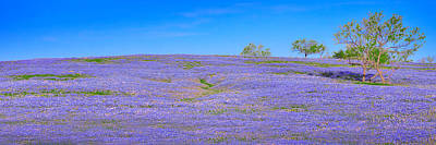 Poster featuring the photograph Bluebonnet Vista Texas  - Wildflowers Landscape Flowers  by Jon Holiday
