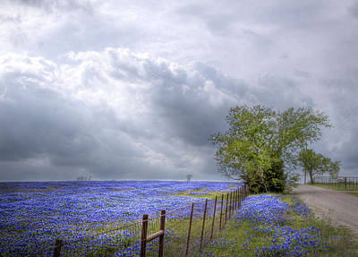 Bluebonnets And Spring Rain Poster by David and Carol Kelly