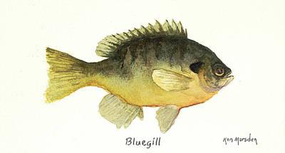 Bluegill Poster