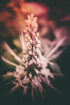 Blured Bloom Poster