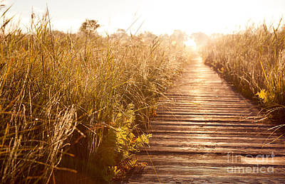Boardwalk And Morass Grass In Sun Rising  Poster by Arletta Cwalina