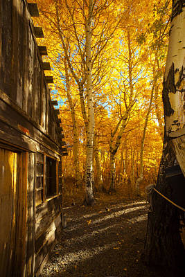 Boat House Among The Autumn Leaves  Poster