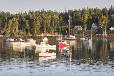 Boats Moored Intenants Harbor Maine Poster