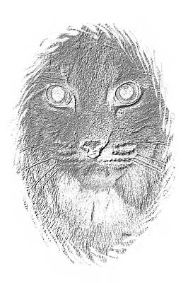 Bobcat In Charcoal Poster