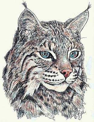 Poster featuring the drawing Bobcat Portrait by VLee Watson