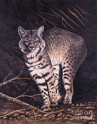 Bobcat Poster by Ricardo Chavez-Mendez