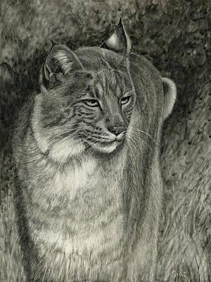 Bobcat Emerging Poster by Sandra LaFaut