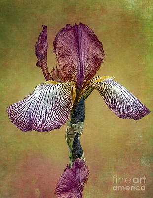 Poster featuring the photograph Bold Iris by Vicki DeVico