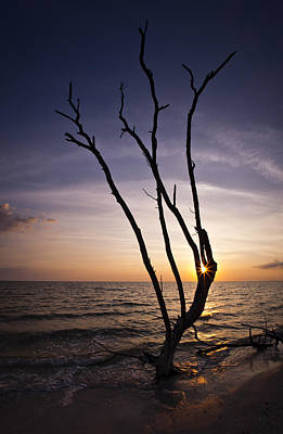 Bonita Beach Tree Poster by Bradley R Youngberg