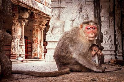 Bonnet Macaque And Young Poster by Paul Williams