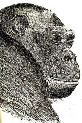 Bonobo Poster by Sandy McIntire
