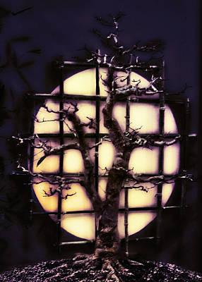 Bonzai Tree At Night Poster
