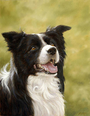 Border Collie Head Study Poster
