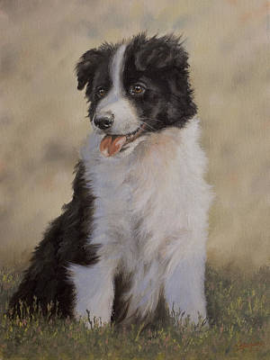 Border Collie Pup Portrait V Poster by John Silver