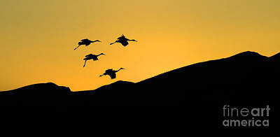 Bosque Del Apache Last Light Poster by Bob Christopher