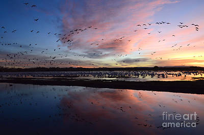 Bosque Del Apache Sunrise Poster by Bob Christopher