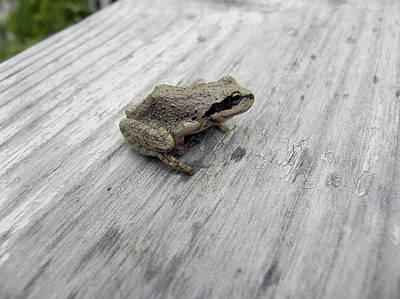 Botanical Gardens Tree Frog Poster by Cheryl Hoyle