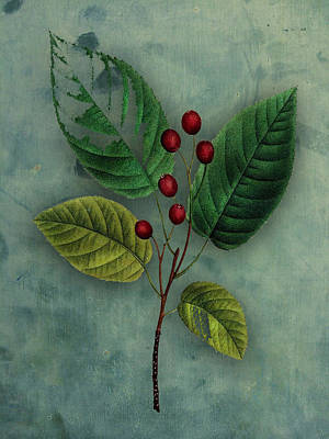 Botanical Silva Poster by Kandy Hurley