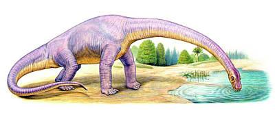 Bothriospondylus Dinosaur Poster by Deagostini/uig