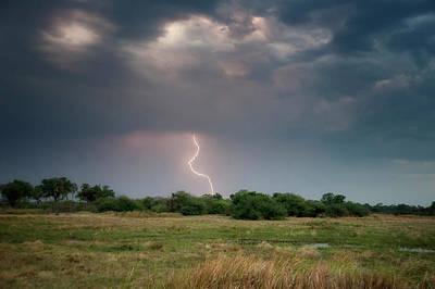 Botswana, Africa Grassland Landscape Poster by Sheila Haddad