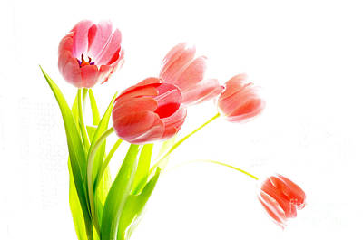 Tulips Flower Bouque In Digital Watercolor Poster