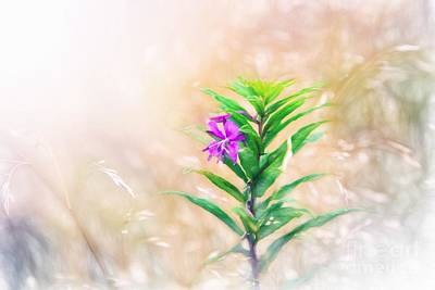 Flower In Digital Watercolor Poster by Ed Churchill