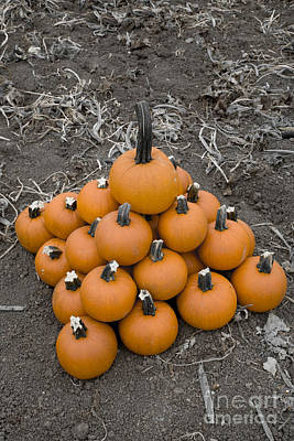 Poster featuring the photograph Bowling For Pumpkins by David Millenheft