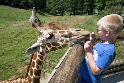 Boy Feeding Giraffe Poster