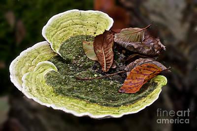 Bracket Fungi  Poster