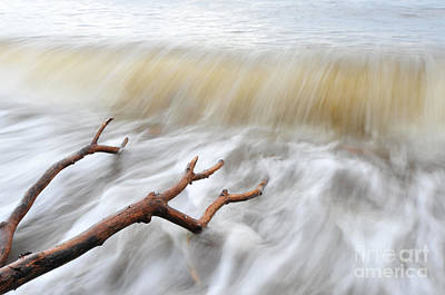 Poster featuring the photograph Branches In Water by Randi Grace Nilsberg