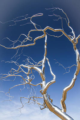 Branches Of Silver Poster by Steven Bateson