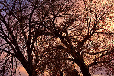 Branching Out At Sunset Poster