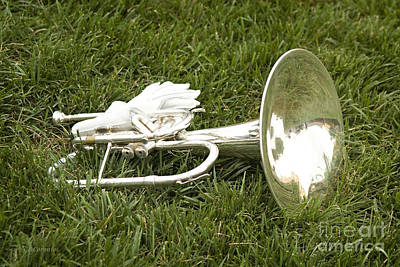 Poster featuring the photograph Brass In Grass by Carol Lynn Coronios