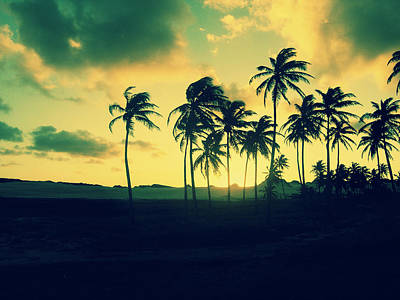 Brazil Palm Trees At Sunset Poster