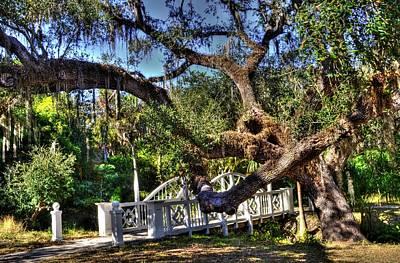 Bridge At Koreshan State Park - Estero Florida Poster by Timothy Lowry